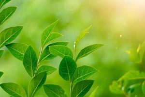plante verte dans la nature au printemps photo