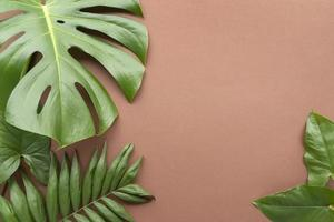 vue de dessus composition de feuilles tropicales minimales photo