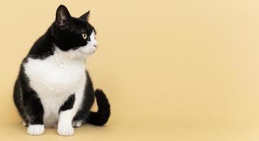 Adorable minou noir et blanc avec mur monochrome derrière elle photo
