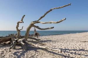 Vieille racine d'arbre est patinée sur une plage surplombant la mer photo