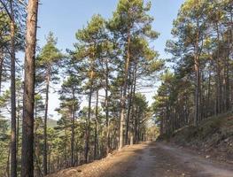 vue sur une vallée boisée avec pins et feuillus photo