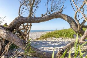 Forêt de pins sur la côte baltique allemande avec des dunes et du sable photo