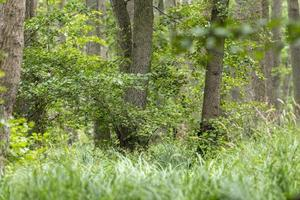 Paysage forestier de la lande allemande avec de l'herbe de fougère et des arbres à feuilles caduques en été photo
