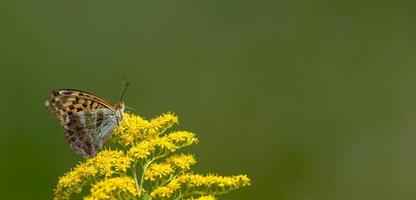 Petit papillon est assis sur une fleur devant un arrière-plan flou vert photo