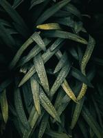 plante verte laisse dans la nature au printemps photo