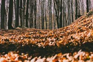 photo de mise au point peu profonde de feuilles séchées