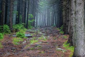 sentier forestier et litière forestière photo