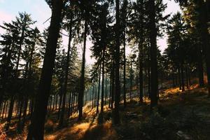 grands arbres et rayons de soleil photo
