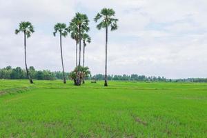 rizières couvertes de nuages de pluie photo