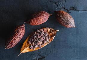 fèves de cacao séchées et cacao séché photo