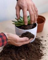 jardinier faisant planter des terrariums avec des cactus succulents photo