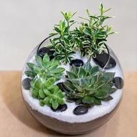 Beau terrarium avec du sable de roche de fleur de cactus à l'intérieur du verre photo