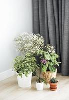 différentes plantes d & # 39; intérieur sur le sol photo