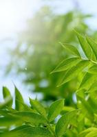 feuilles d'arbre vert dans la nature au printemps photo