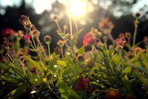 fond de fleurs de plantes de belles fleurs photo