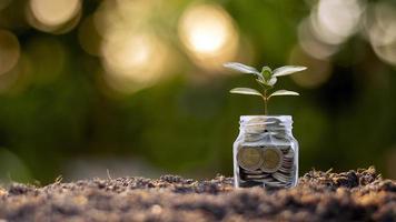 petites plantes qui font pousser de l'argent en bouteille photo