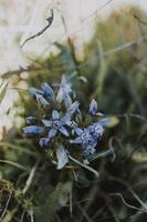 fleur pétale violet et blanc photo