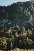 peinture d'arbres et d'arbres verts photo