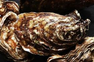 photographie d'huîtres sur fond d'ardoise pour illustration alimentaire photo