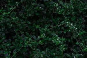 texture de feuilles vertes tropicales photo