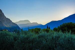 lever du soleil parmi les oliviers photo