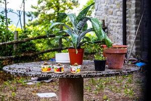 table avec succulentes photo