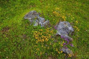 fleurs sauvages et troncs photo