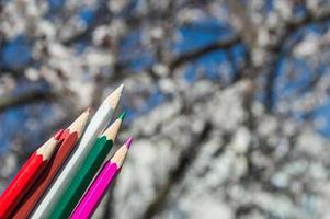 crayons en fleurs d'abricot photo