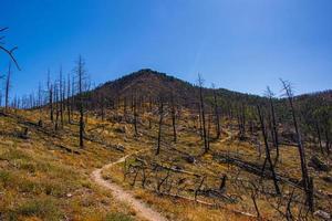 Chemin à travers les arbres dévastés par un incendie de forêt dans le parc Chautauqua à Boulder, Colorado photo