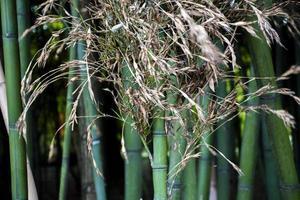 gros plan, de, a, petit, vert, forêt bambou photo