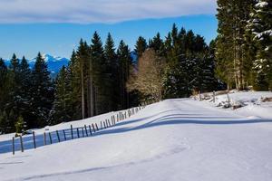 Forêt de pins avec des pics enneigés en arrière-plan à Asiago, Italie photo