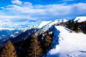 pins et neige photo