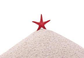 étoile de mer rouge photo