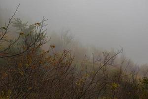 Brouillard de novembre dans la province de Vicence, Vénétie, Italie photo