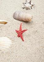 coquillages sur sable blanc photo