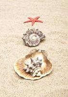 perle sur le coquillage photo