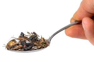 De nombreux insectes morts se trouvent sur une cuillère à soupe tenue dans la main isolée photo