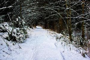 empreintes de pas dans la neige dans la forêt photo