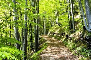 chemin dans la forêt photo