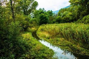 Chemin marécageux parmi les roseaux sur les rives des lacs de Revine, Trévise, Italie photo