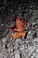 feuille brune sèche sur le sol photo