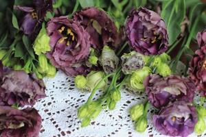 fleurs d'eustoma lisianthus tulipe eustomas gentiane photo