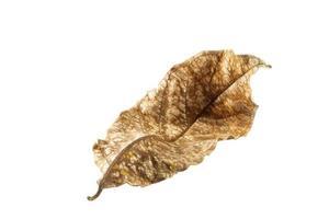 courbure des feuilles sèches photo