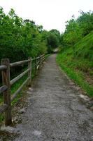 route avec des arbres verts dans la montagne photo