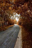 route avec des arbres bruns dans la montagne en saison d'automne photo