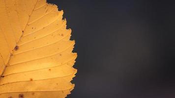 Feuille d'automne jaune sur un fond d'automne flou photo