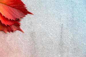 feuilles d'automne ou d'automne sur fond gris photo