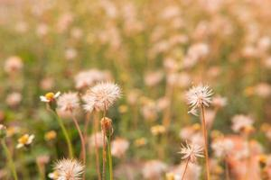 fond de fleurs d'été photo