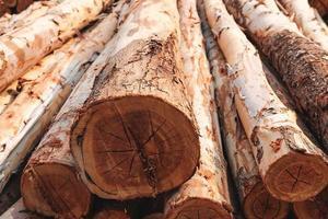 la texture de fond de l'arbre coupé photo
