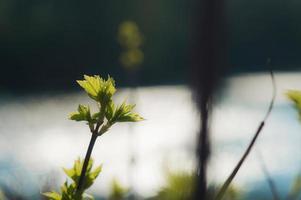 premières feuilles vertes sur une branche avec bokeh hexagonal photo